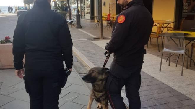 Carabinieri cinofili