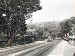 neve albisola
