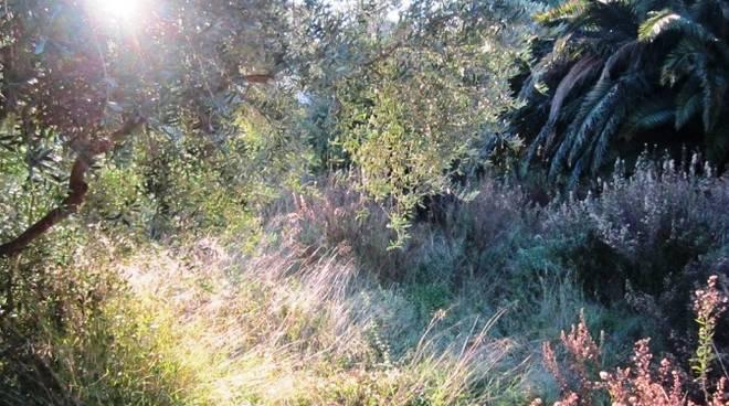 zona olivette loano