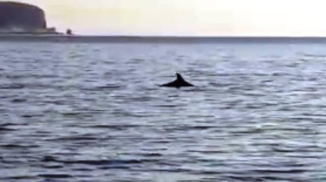 delfini savona