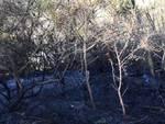 Incendio boschivo nella zona di Stellanello