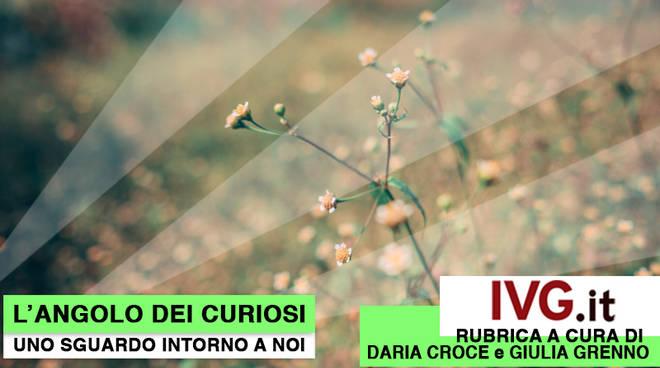 L'Angolo dei Curiosi