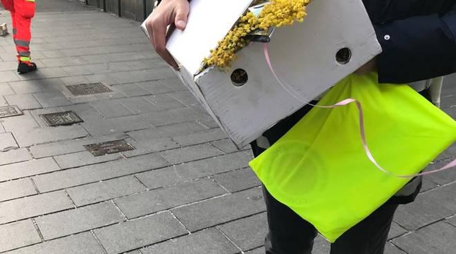 Sequestri mimosa