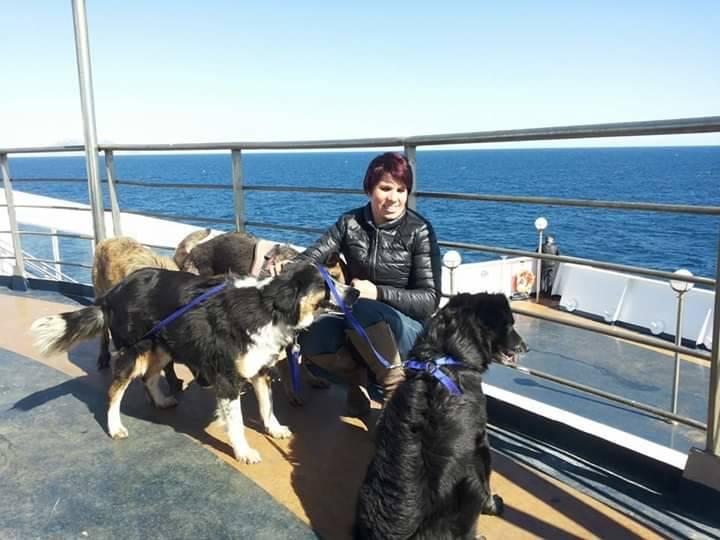 trasporto animali su traghetto
