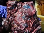 capidoglio spiaggiato plastica inquinamento ambiente