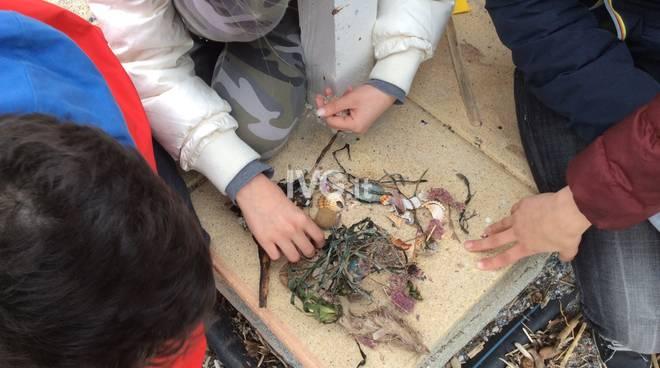 """Per la \""""Giornata del Mare\"""" gli studenti di Pietra Ligure studiano la biodiversità del Mar Ligure"""