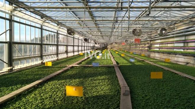 Il progetto verde è diventato realtà, che successo per le medie di Albissola Marina