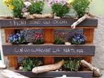 fiori commercianti borghetto