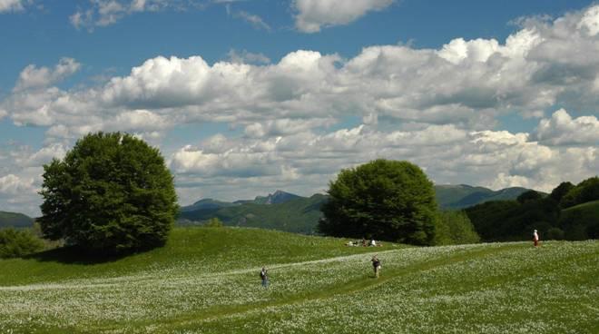 maggio nei parchi primavera narcisi