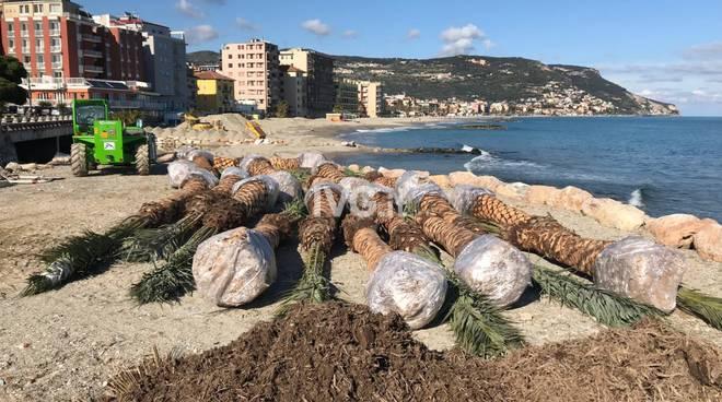 Nuove palme a Pietra Ligure