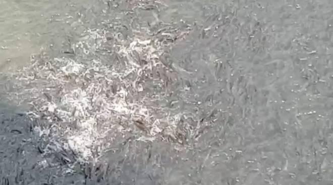 pesci polcevera