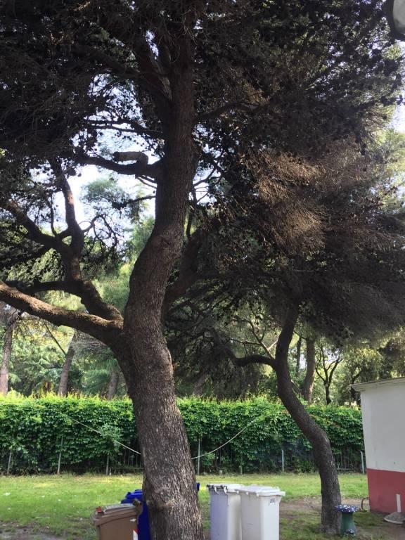alberi prolungamento savona