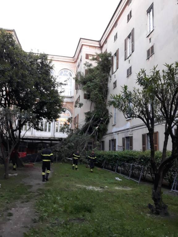 albero caduto al galliera