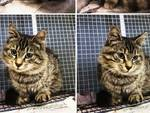 Gatto Abbandonato Urbe