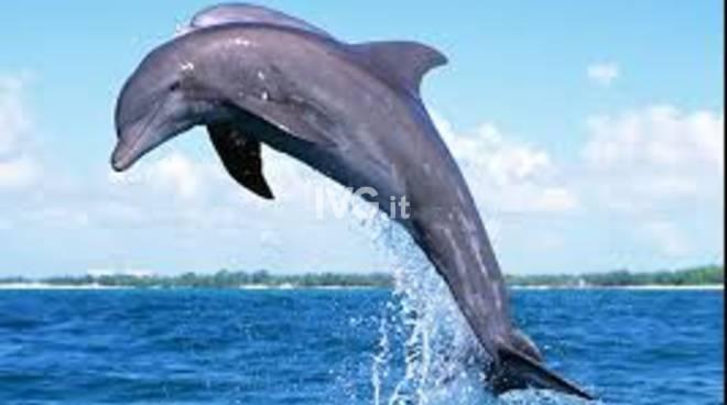 Diritto all\'ambiente. Lo stato di salute del mar ligure, inquinamento e prevenzione