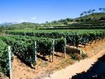 Bio Vio vigna azienda agricola Albenga