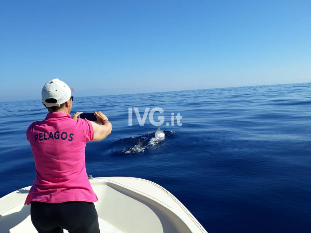 Ennesimo spettacolare avvistamento di cetacei
