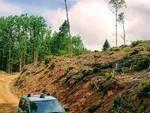 forestali boschi