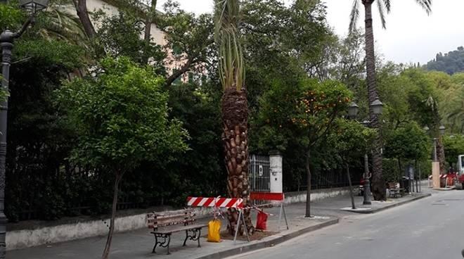 viale delle palme aster