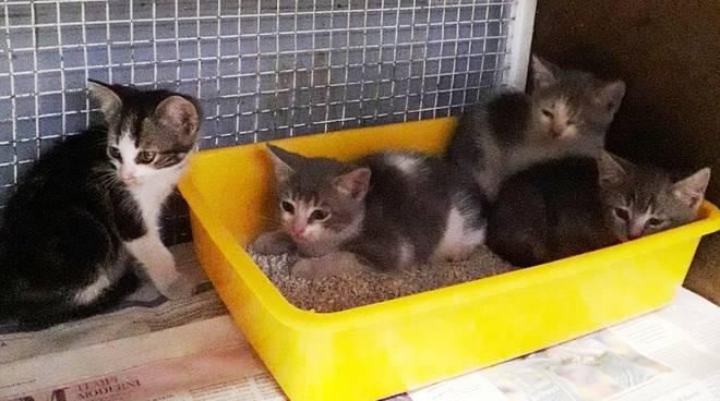 Gattini Abbandonati Urbe