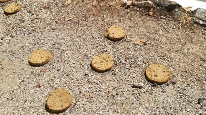 bocconi biscotto avvelenati