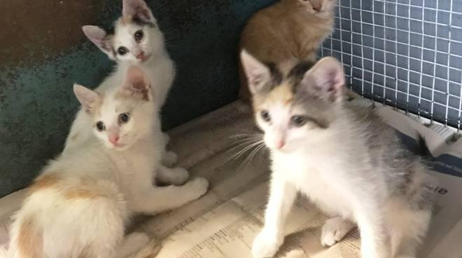 cucciolata gattini