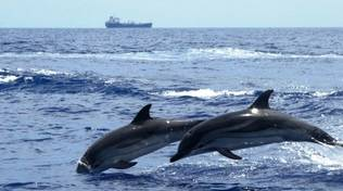 delfini mar ligure