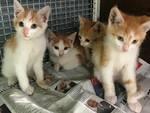 gattini cucciolata
