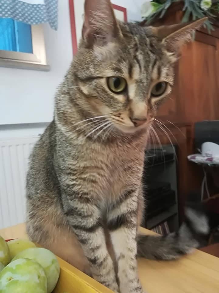 gatto pablo