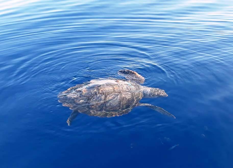 santuario cetacei