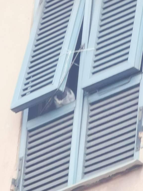 Albenga, gatto denutrito e disidratato si lancia dal secondo piano