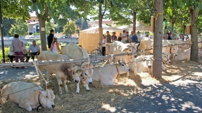 Antica Fiera del Bestiame Carcare