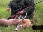 capriolo caccia