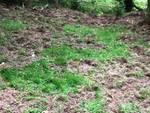 danni cinghiali boschi