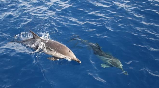 delfini comuni