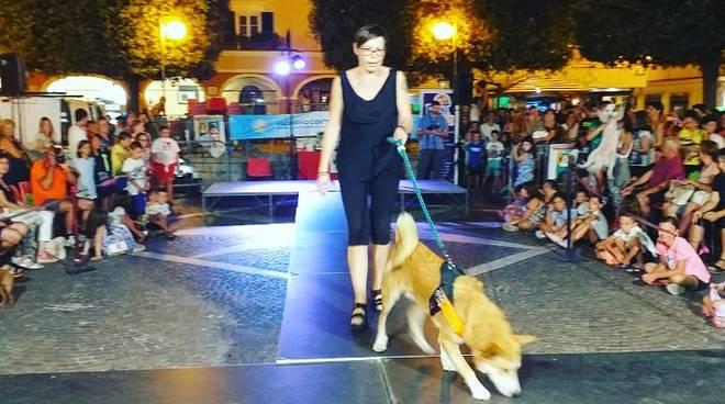 dog in pietra 2019