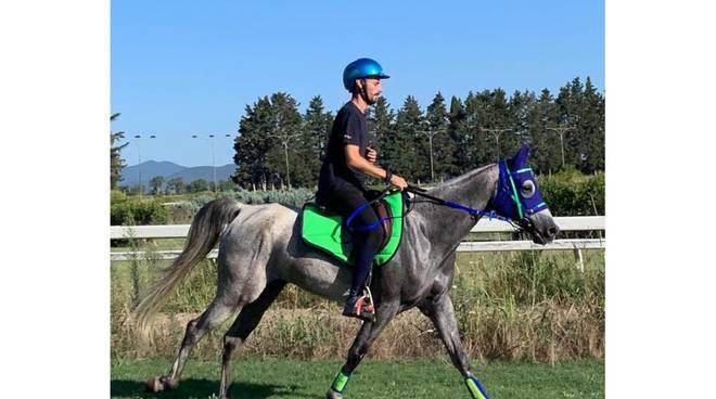 endurance equestre.