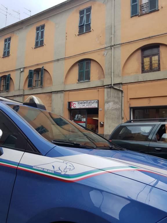 Gatto lanciato Albenga