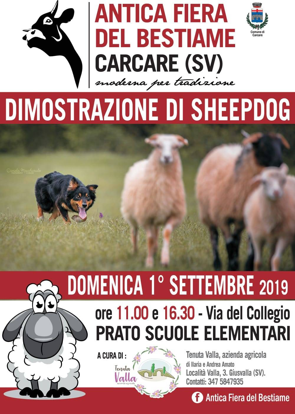 Sheepdog Carcare 2019