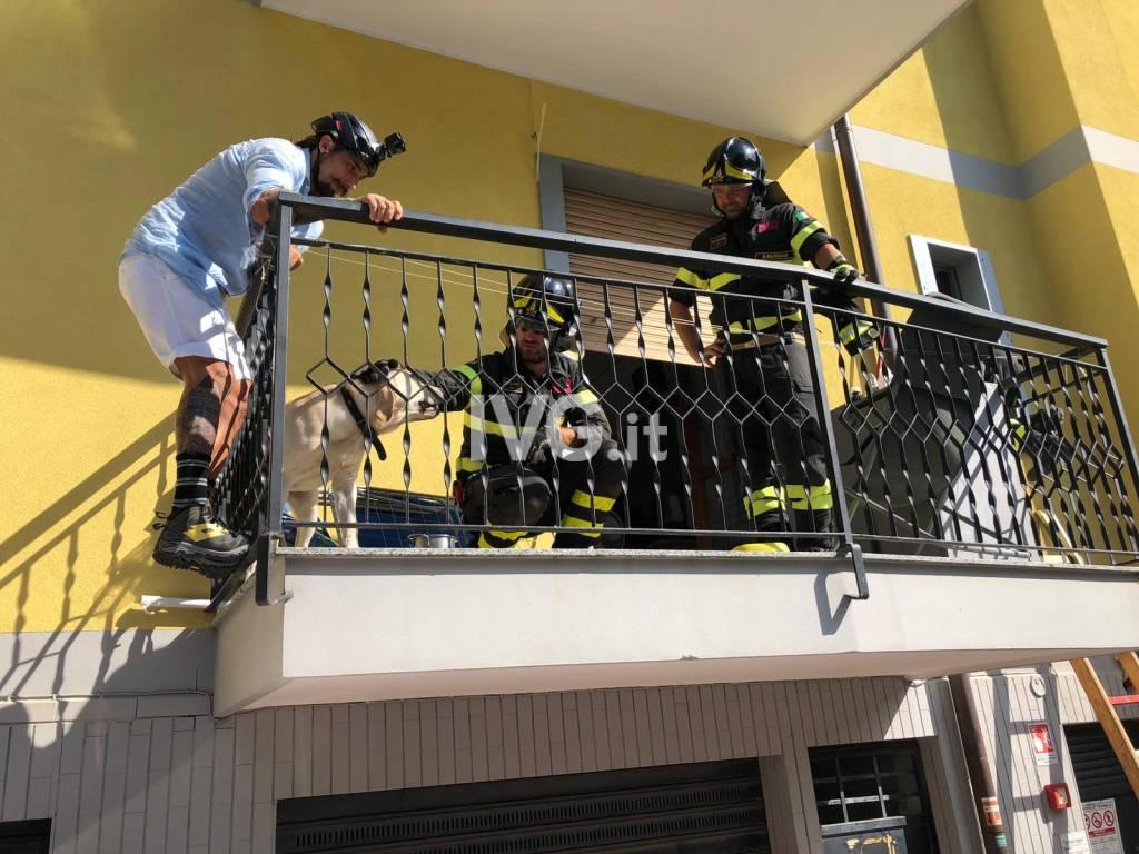 Un cane intrappolato su un terrazzino a Borghetto