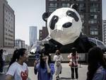 Little Panda Journalists Visit the World