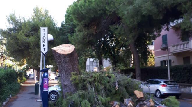Abbattimento alberi e stato del verde pubblico