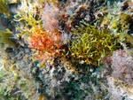 Mar Ligure: l'estate sta finendo, ma..