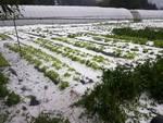danni grandine agricoltura