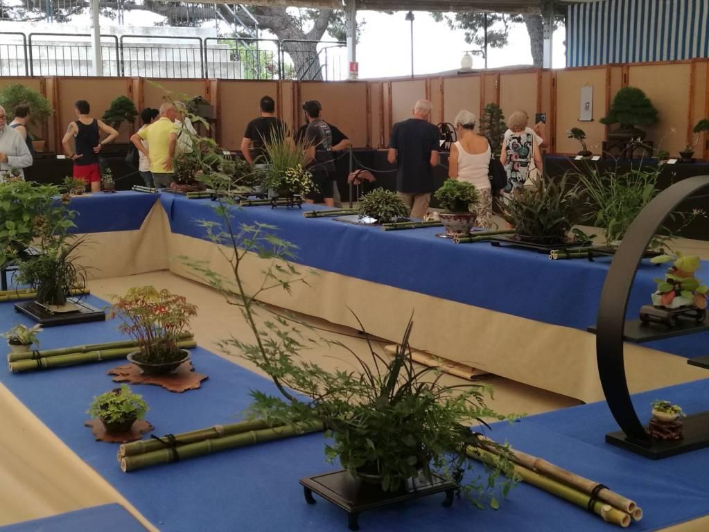 Festival Bonsai 2019 Andora
