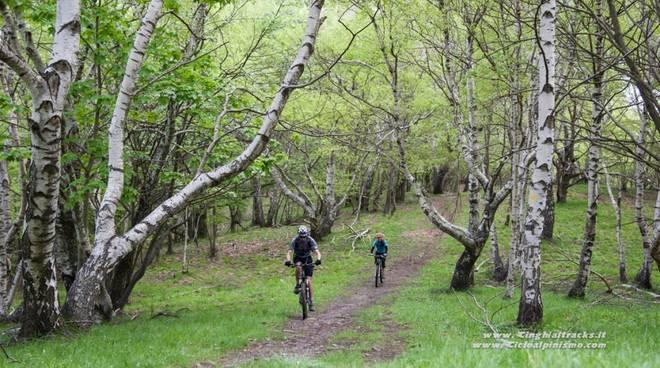 generica natura bosco sentiero