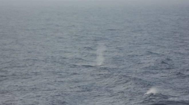 Balene Santuario Pelagos