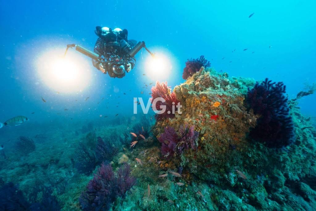 fondali marini