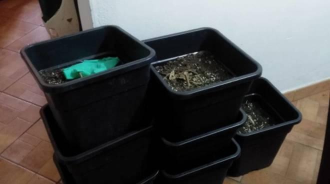 piantagione marijuana castelbianco