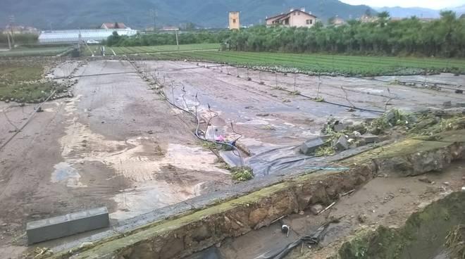 maltempo danni agricoltori